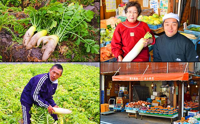 兵庫県明石市で栽培された苦味の全くない大根